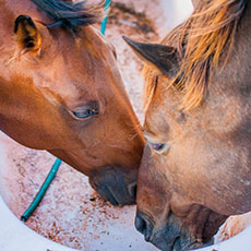 Happy health horses rely on a schedule of preventative medicine
