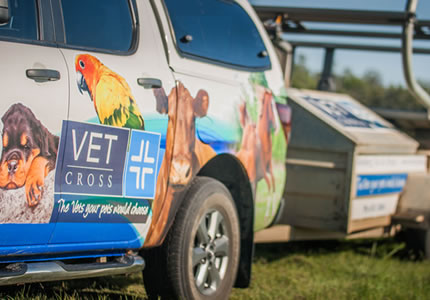 Vet Cross staff treat your animals as if they were their own.